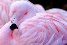 pink / by Maria Varni