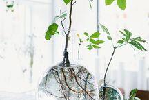 Plants • Living