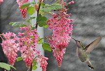 California Winter Bouquet / by Jenni Brummett
