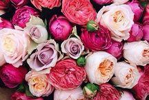Floral / by Cassie Tishler