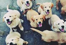 Because Dogs Make Me Happy :) / by Janey Botkins