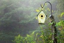 Garden Spaces and Decor / by Tina House