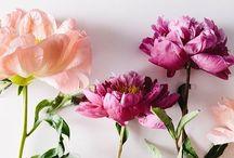 -{ bloom }- / Beautiful flowers, floral arrangements, bouquets