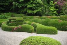 -{ knot gardens & hedges }- / Formal gardens, clipped hedges, knot gardens for the obsessive amongst us gardeners