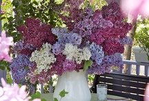 lavender and lilac / by Tonya Baker
