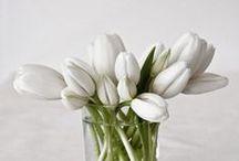 PLANT | Inspiration / MOTTO INTERIOR DESIGN: Greenery Inspiration