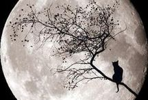Halloween / by Lynn White