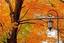 Autumn / by Lynn White