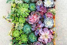 Green Thumb / Landscaping, plants, garden