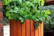 Gardening / Gardening ideas