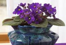 Terrariums & Houseplants