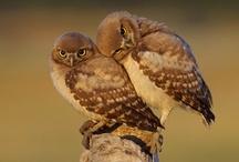 Owls ~ Who's Who...ot?
