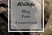 Wildlife Blog posts / Wildlife and nature lovers, looking for great blogs and bloggers? this board is for you! An array of amazing wildlife and nature blog posts