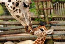 Cute Critters...