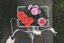 nature | gardens + blooms / pretty plants + florals