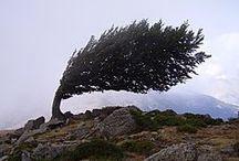 Trees / by Rob Mandolene