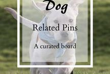 Dog related pins / This is the place to find dog related posts, from product reviews to training tips, blogs about dogs to new kit. Anything doggy goes (keep it clean!)