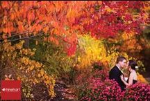 Fall Wedding Ideas / by Meadow Wood Manor