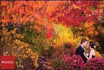 Fall Wedding Ideas / by Meadow Wood Manor