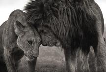 Animals / by sayrueART
