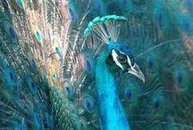 Birds & Animals / by Betty Soriano