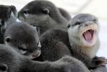 Otters!!!! / by Masey Morris