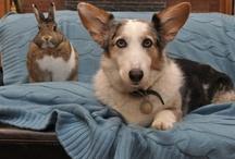 Bun & Pup Club