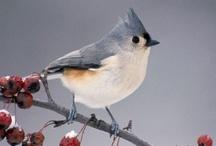 BIRDS 2 / by Shirley Weston