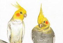 Everything Cockatiel !!! / by Heather Heinemann-Fleischer