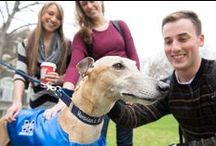 Get to Know the Greyhounds / Our Hounds around campus, pawed and footed! / by Moravian College