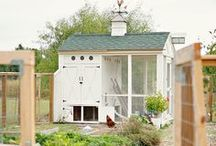    Chicken Coops    / Maybe one day... we do have a white bunny though. Until then, here are some chicken coop ideas that are pretty! I love to decorate our 1952 brick home!  See what we've done and some inspiration at www.dianaelizabethblog.com