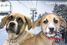 Puppy League