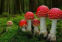 My Mycology / by Timothy WRIGHT