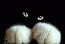 animal planet - cats 1