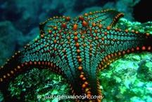animal planet - underwater