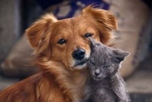animal planet - cats and dogs