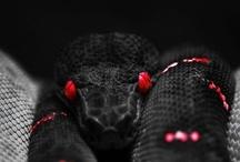 animal planet - reptiles