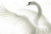 animal planet - birds