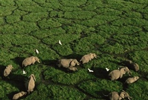 Travel - Africa / All of Africa south of the Sahara...Victoria Falls, Zanzibar, the Serengeti...  / by Mallory Grace