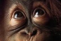 animal planet - monkeys