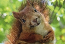 animal planet - squirrels and other rodents