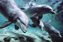 animal planet - dolphins
