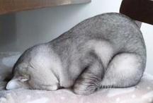 animal planet - cats in sleep