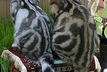 animal planet - cat's beauty