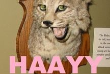 Funny Taxidermy / Recently I have seen the memes of bad taxidermy.  Some taxidermy is done skillfully, but it still seems odd and out of place.  These are some of those odd, or just wrong, results of taxidermy..