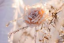 Raindrops on Roses / by Analyn Borthick