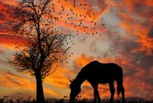 Horse Love / horses riding quotes photography many other horse things / by Whitney McNair