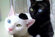 animal planet - cats 2