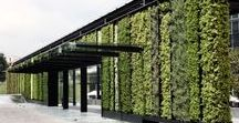 gardening in vertical