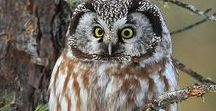Night OWLS / Stuff too cute, you would die of cuteness if you look too long at it....